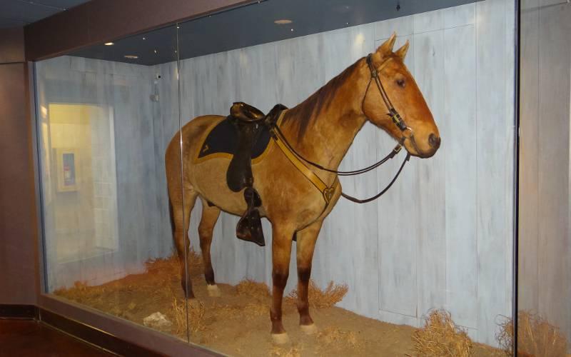 15naturalhistorymuseum1